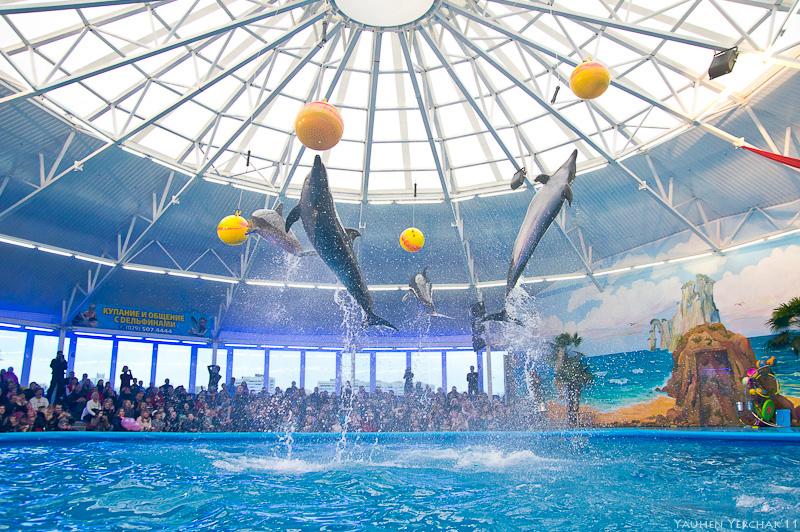 Открытие минского дельфинария Немо, дельфины, фото