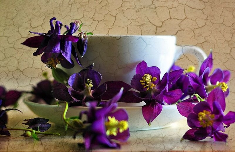 98600__purple-flowers-and-white-cup_p.jpg