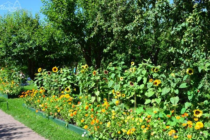 садовые_цветы_sadovye_tsvety
