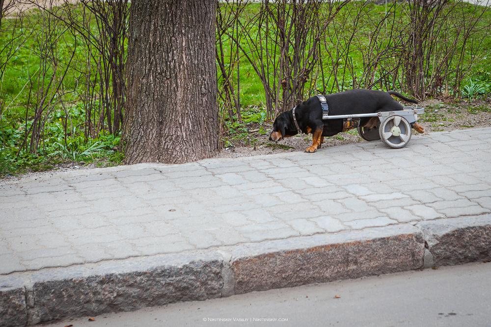Улицы Зеленоградска здесь, очень, любых, город, личных, облагородить, восстановления, только, будет, всётаки, Очень, фотографий, прокуренными, деревом, стенами, денег, круто, узких, сырым, подъезд