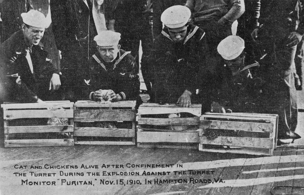 USS PURITAN (BM-1) Sailors display live cat and chickens, after they were confined in Puritan's Turret for concussion tests, in Hampton Roads, Virginia 15 November 1910