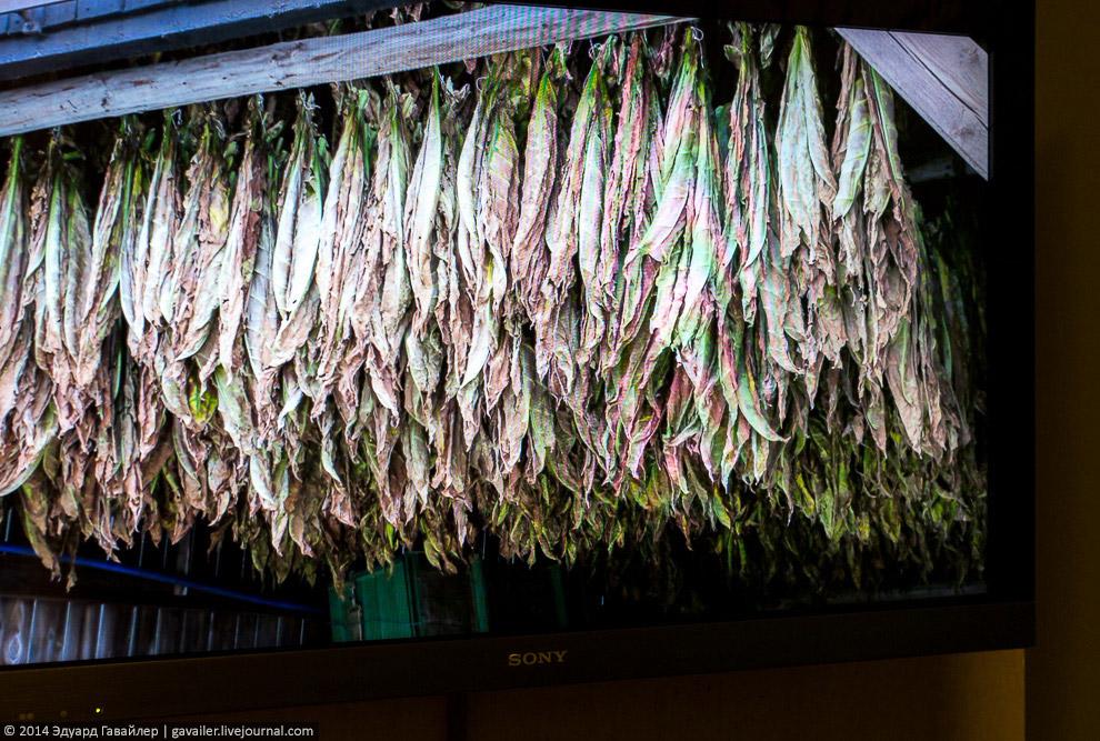 3. Затем листья скатываются в кипы и в течение месяца происходит процесс ферментации (биохимиче