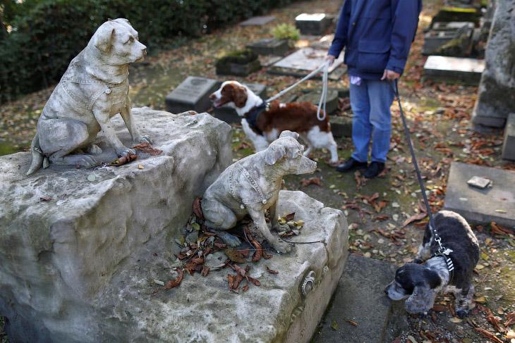 1. «Кладбище собак» представляет собой вытянутую в длину территорию, которая выходит на Сену. З