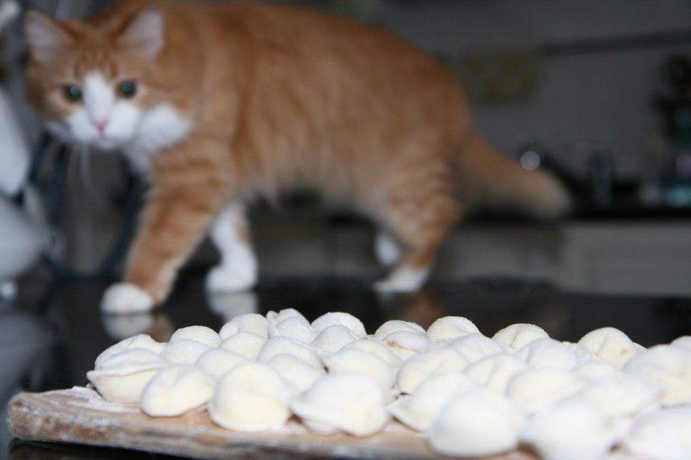 13. Если у вас есть только пельмени, на третий день кошка ест их с удовольствием.