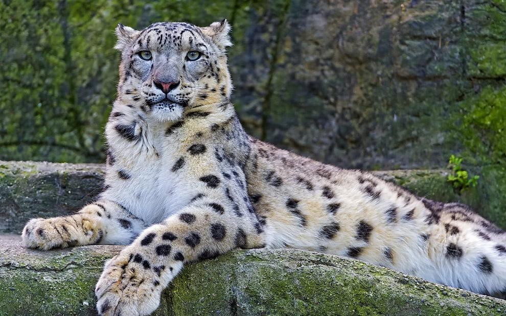 6. Продолжительность жизни этих животных 20-25 лет, что выше, чем у большинства других крупных