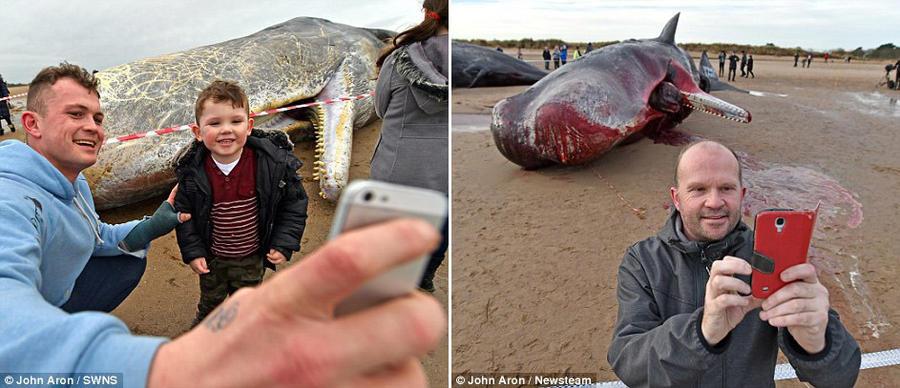 7. Любопытные местные жители хлынули на побережье, чтобы посмотреть на туши мёртвых кашалотов. Некот