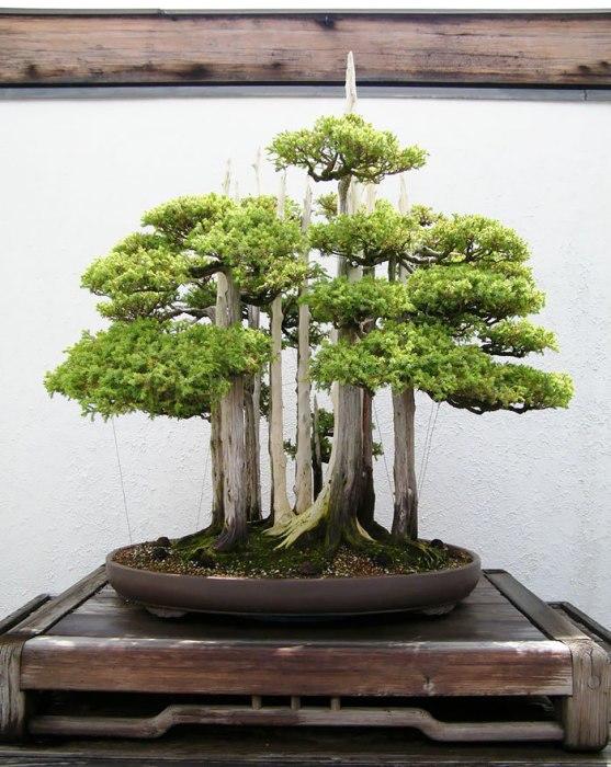 Искусство бонсай: 10 невероятно красивых мини-деревьев, созданных людьми