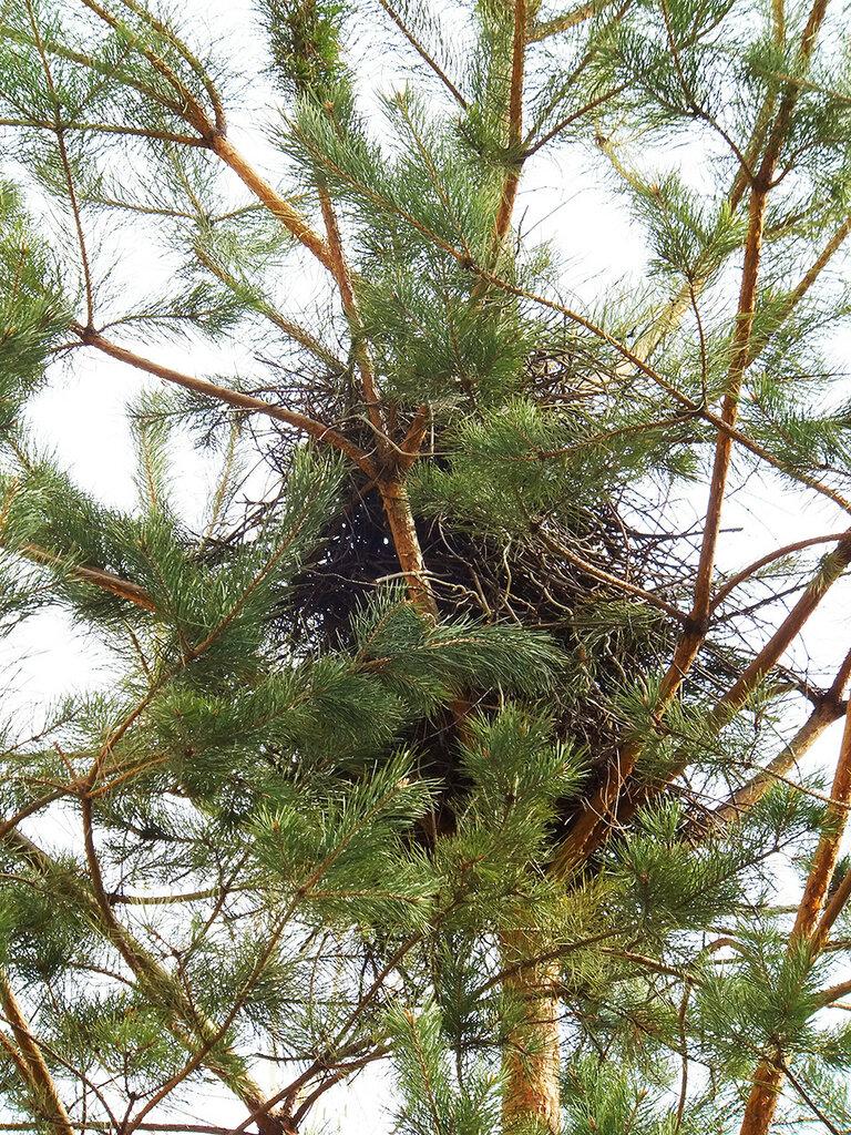 сорочье гнездо с крышей