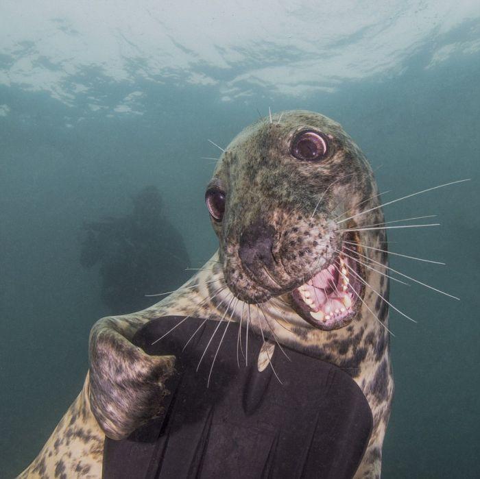 Лучшие работы конкурса подводных фото