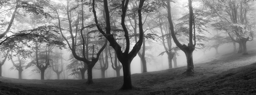 Foggy Forests of Ancient Trees Pruned for Charcoal in Basque Country Photographed by Oskar Zapirain