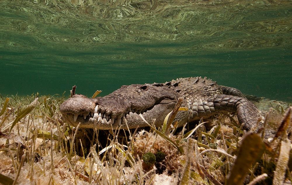 Photographer Jorge Cervera Hauser Captures Sea Creatures Against Sun-Drenched Oceanscapes