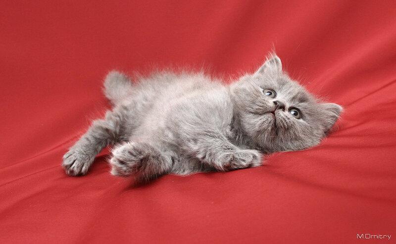 Коты & кошки (2016)
