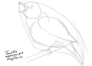 Как-нарисовать-соловья-карандашом-поэтапно-1.jpg