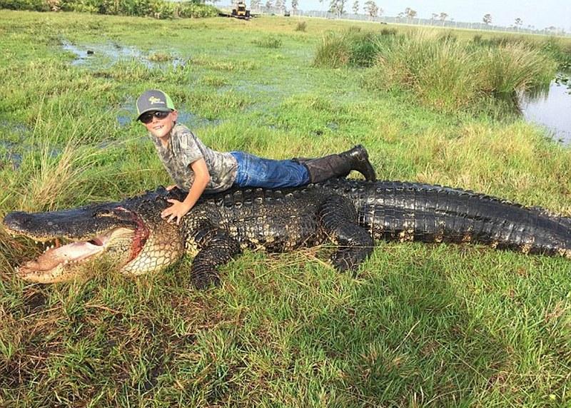 Охотники поймали огромного аллигатора
