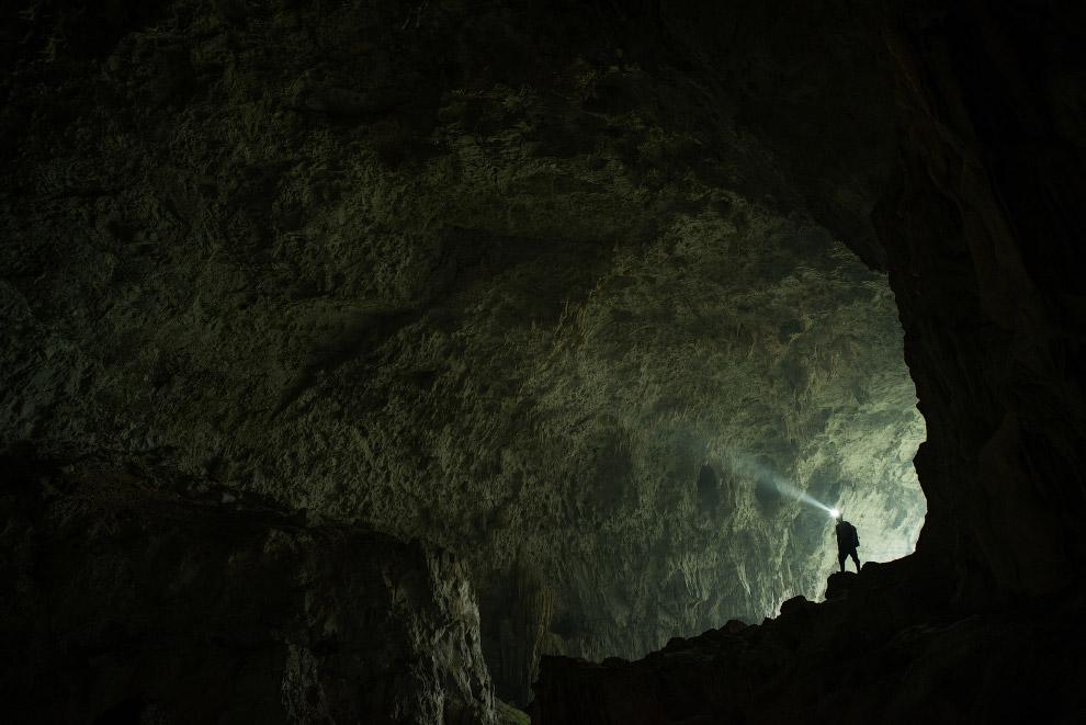 9. Кроме летучих мышей, в некоторых пещерах в районах с тёплым климатом обитают несколько видов насе