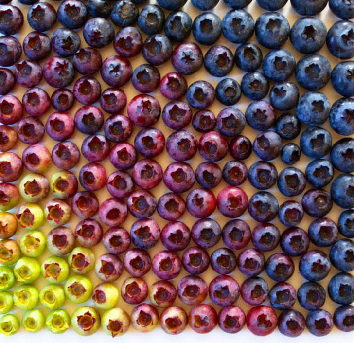 Что вы испытываете при виде этих разложенных по оттенкам ягод голубики?