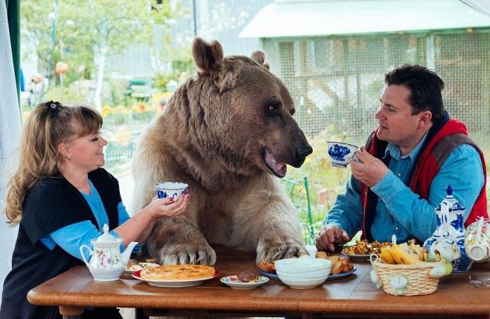 медведь живет в русской семье