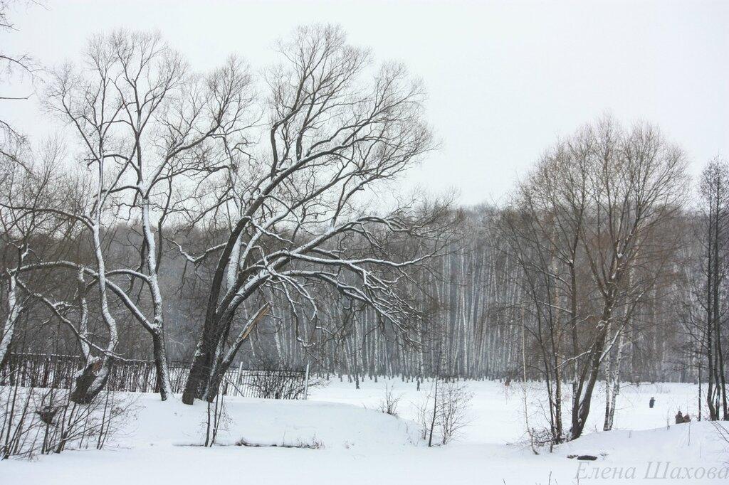 Тимирязевский лес-44.jpg