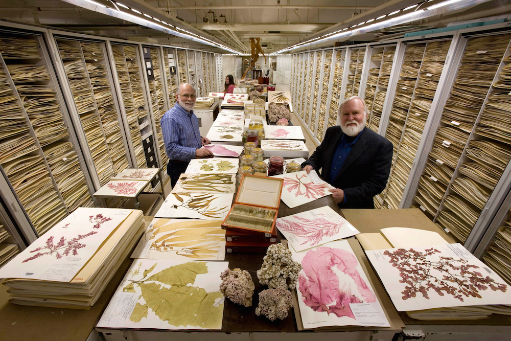 The Botany Department Herbarium at the Smithsonian Institution's National Museum of Natural History,