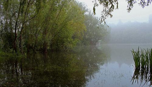 Утро туманное ....