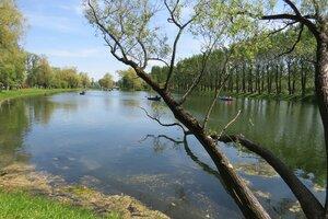 Интересные места и достопримечательности - Озеро с утками в Московском парке Победы в Санкт-Петербурге