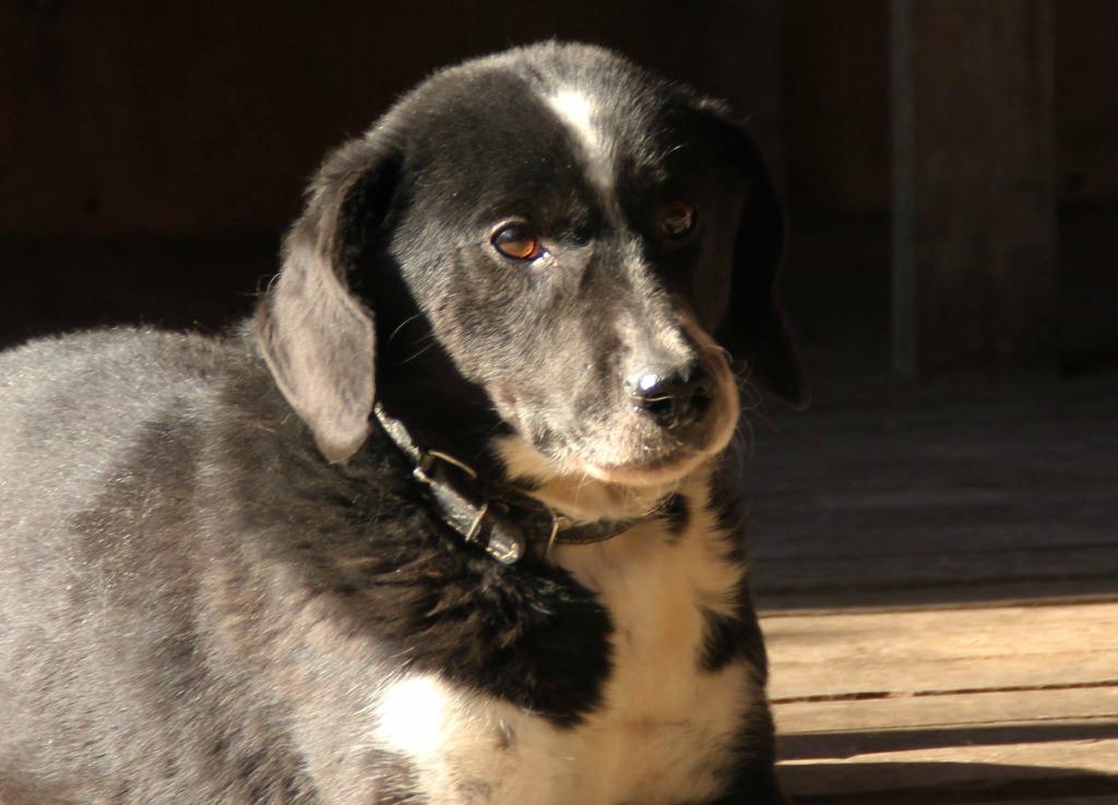Бакс собака из приюта догпорта