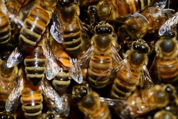 В супермаркетах Metro обнаружили мед с небезопасными веществами