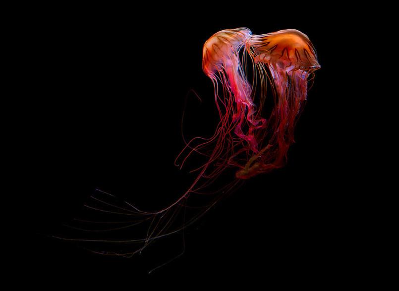Medusa: Photo Series by Dirk Weyer