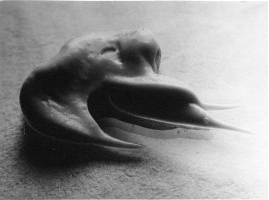 1933. Непреднамеренная скульптура (Морфологическая случайность зубной пасты...)