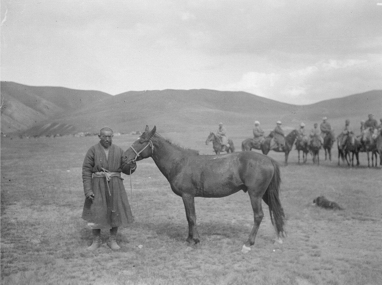 Киргизская лошадь семилетка