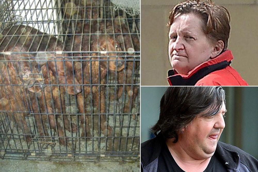 Пара содержала 14 собак в адских условиях