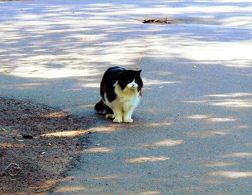 Кот на перекрестке