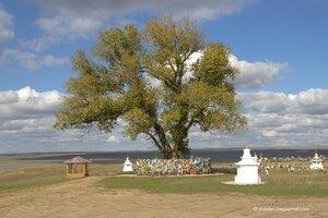 Тайны священного дерева
