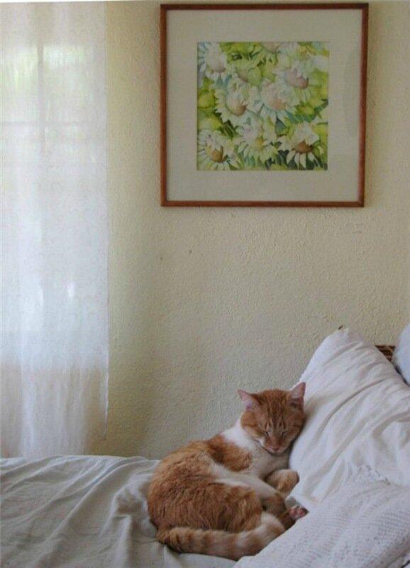 Баю бай, должны все кисы ночью спать   Фотографии забавно спящих кошек!