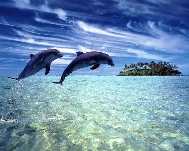 Дельфин Если взглянуть в глаза дельфину, то может показаться, что он всё понимает и даже пытается за