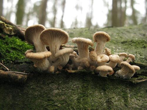 Некоторые грибы, очевидно, были прошлогодними или выросшими в зимние оттепели, но и совсем свежие экземпляры присутствовали по соседству Автор фото: Станислав Кривошеев