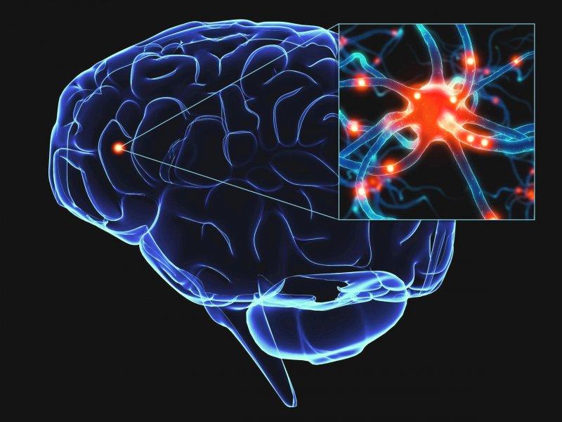 Ученые отыскали участок мозга, который помогает перенимать опыт от остальных людей