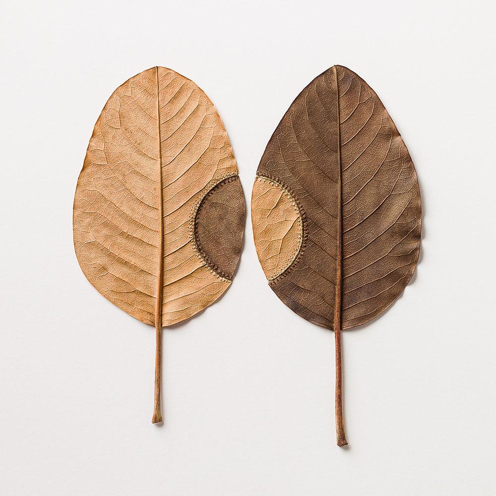Trans-Plant No.19. 40.2 H x 40.2 W cm. Magnolia leaves, cotton yarn.