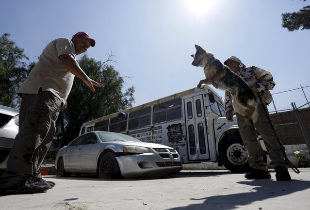 Dog trainers work with a previously abandoned dog at a police centre in Saltillo, Mexico March 4, 20