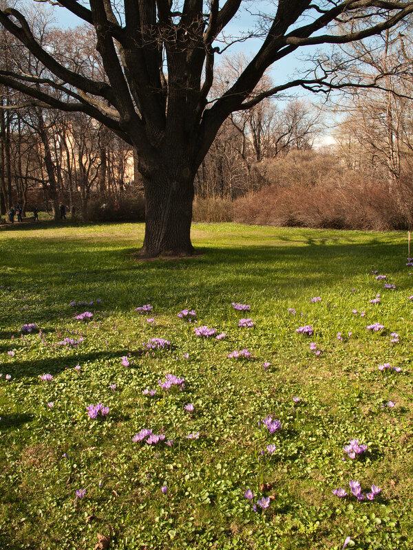 Следы весны
