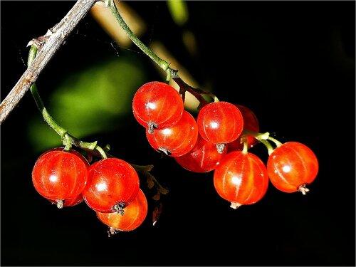 В каждой ягодке спрятано солнце