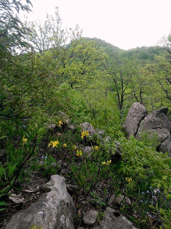 В горах ... SAM_7039.JPG