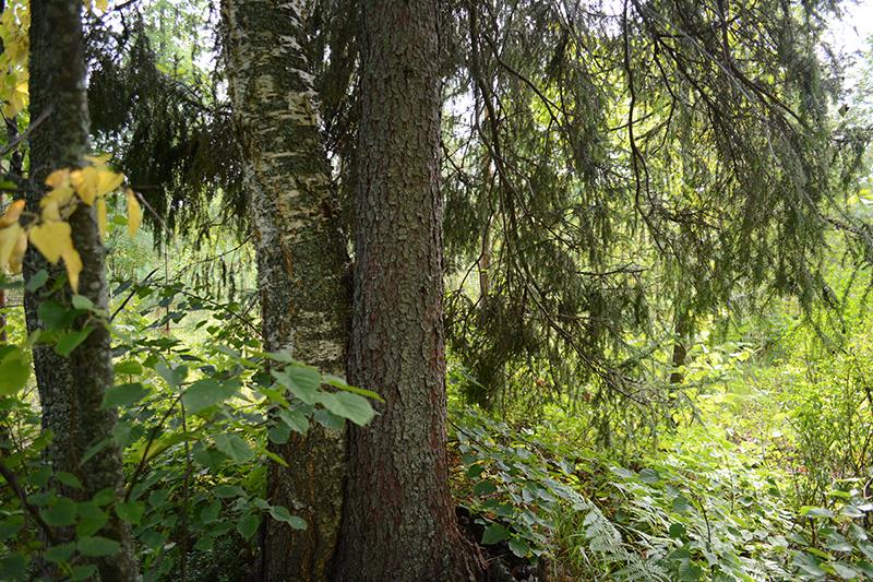 леса 2.jpg