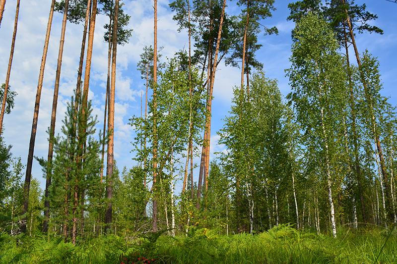 леса 3.jpg