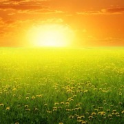 Солнышко над полем