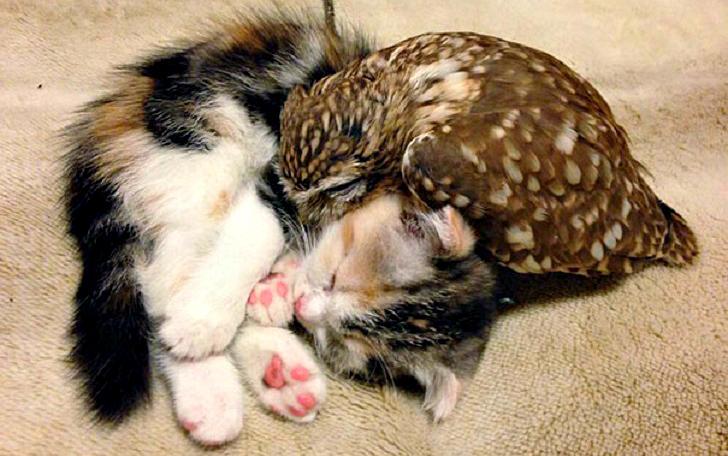 Необычная дружба совенка и котенка (7 фото)