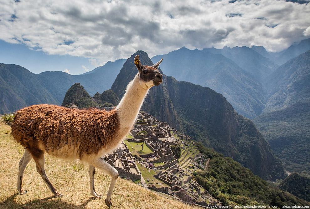 3. В приехал в Мачу-Пикчу на туристическом поезде, которым оперирует одна из двух железнолорожн