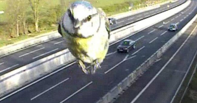Полиция Нортгептона поделилась этим забавным кадром в Интернете, и фото стало по-настоящему популярн