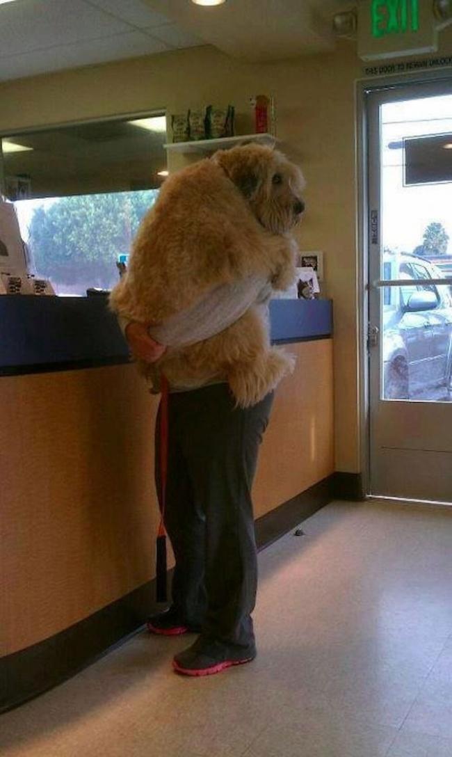 © reddit  Так вот что имеет ввиду муж, когда говорит, что наш пес немного труслив...