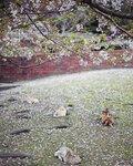 okunoshima-rabbit-island-japan-10.jpg
